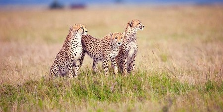 4days budget camping private safari lake manyara serengeti ngorongoro FVPRi.jpg